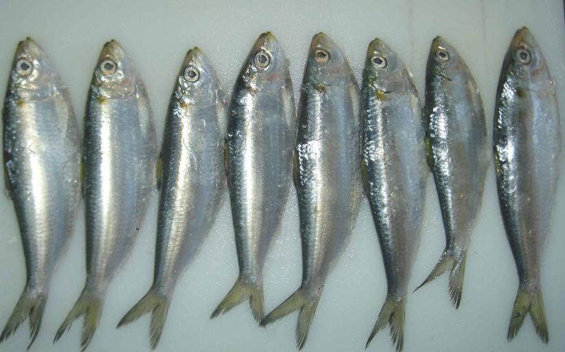 Elite Salads brand schmaltz herring products recalled