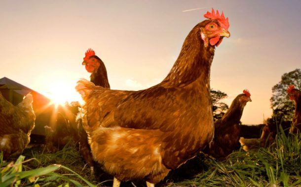 Chicken and Chicken Products Tariff Rate Quota – Opening of the 2018 allocation year application period