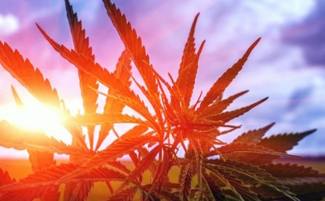 The Latest News from WSPS - Preparing for Marijuana in the Workplace and Upcoming Events